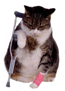 farmthaionline.com ปฐมพยาบาลแมว